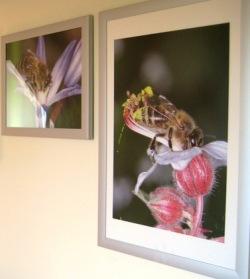 Bilder, Bienen
